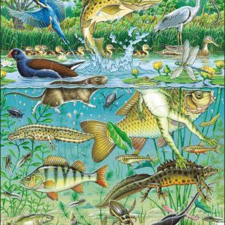 Puzzle Zvířata v rybníku 50 dílků